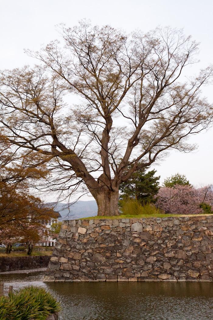 Mjolk_Kitka_Japan_2013--26