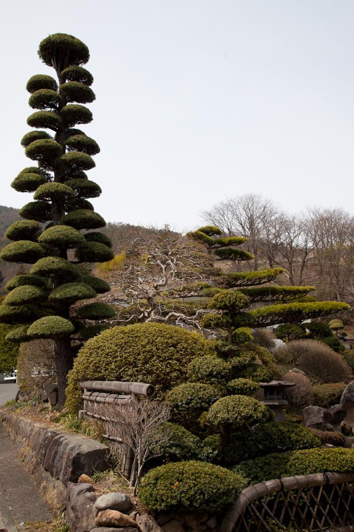 Mjolk_Kitka_Japan_2013--30