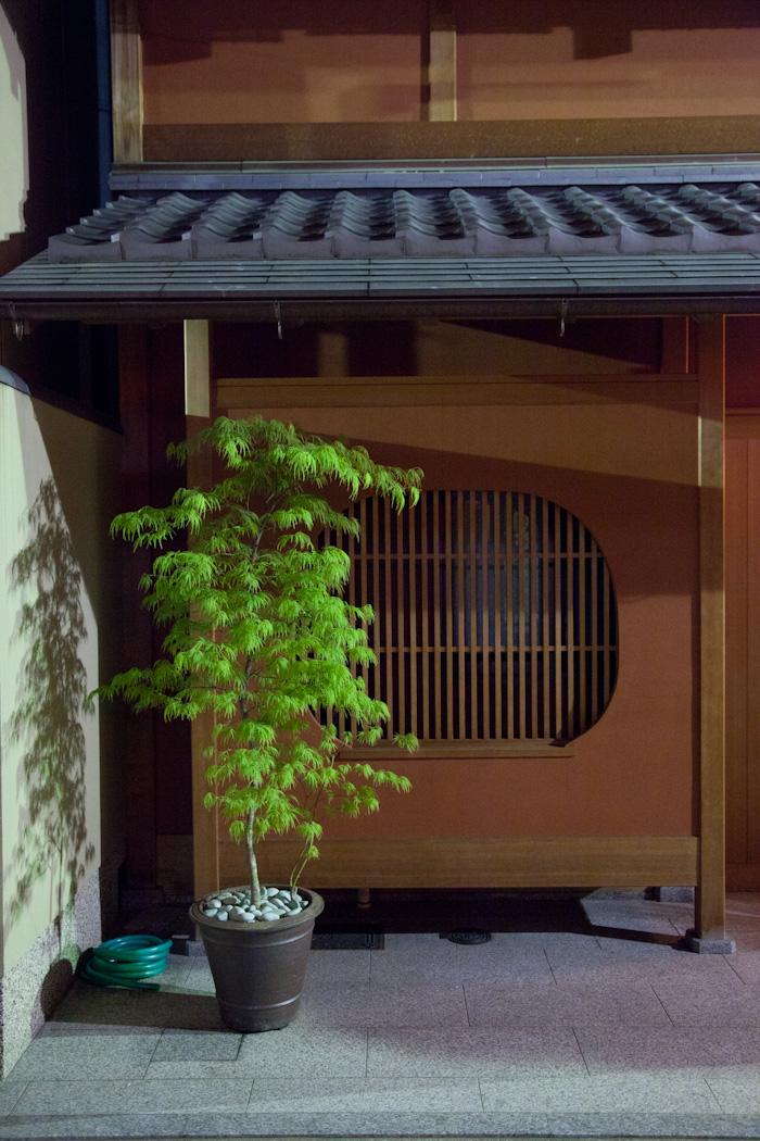 Mjolk_Kitka_Japan_2013--9