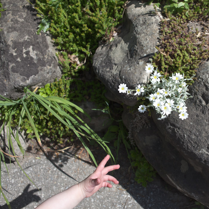 kitka_botanical_gardens-5