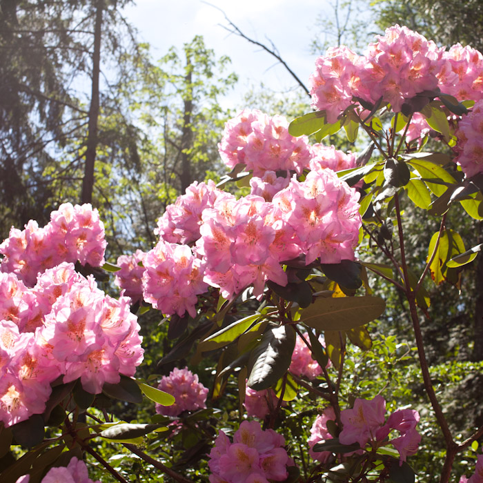 kitka_botanical_gardens-6