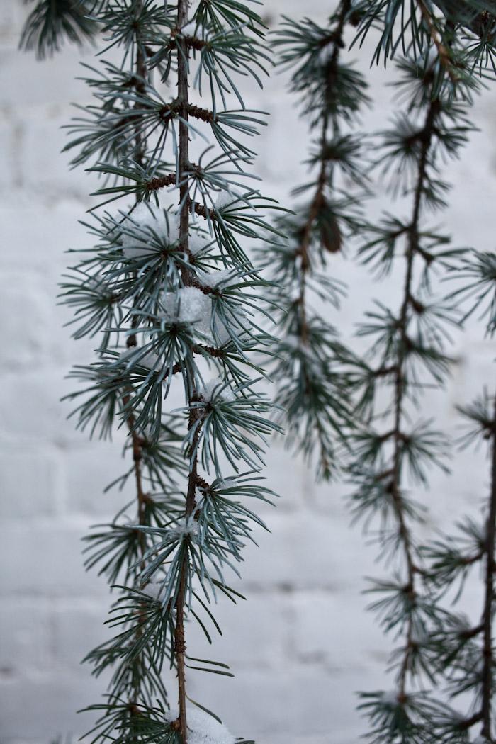 snow_toronto-8