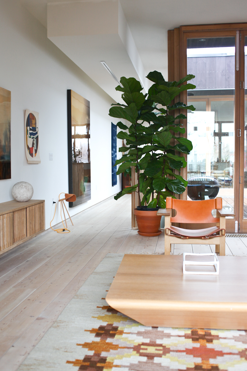 Fiddle_Leaf_Fig_Ficus-1