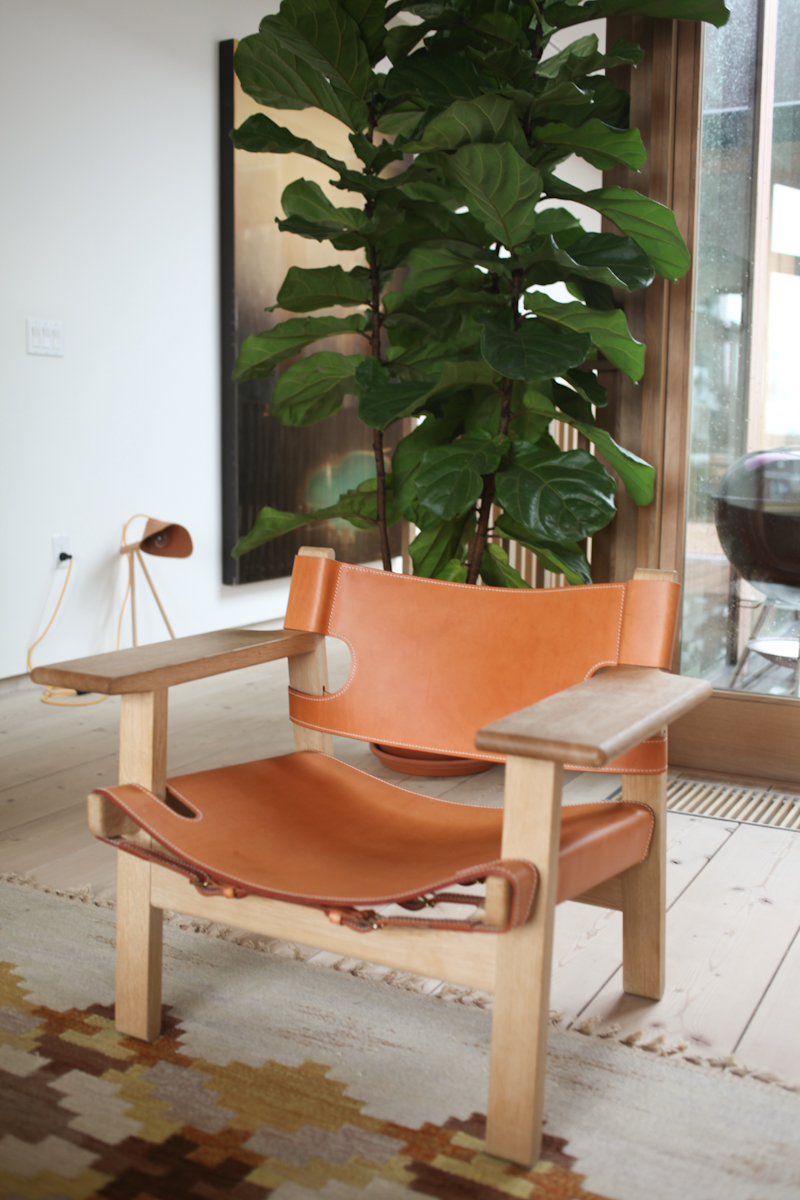 Fiddle_Leaf_Fig_Ficus-2