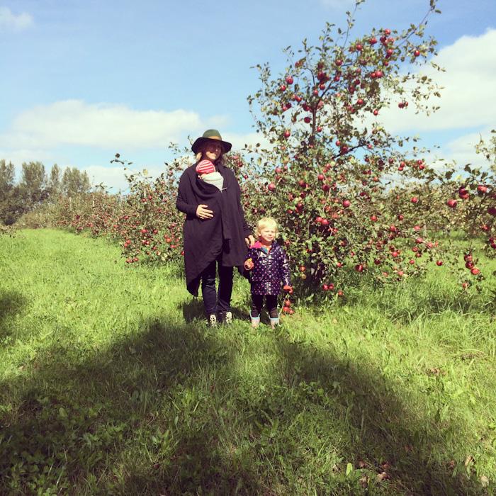 apple_picking-4