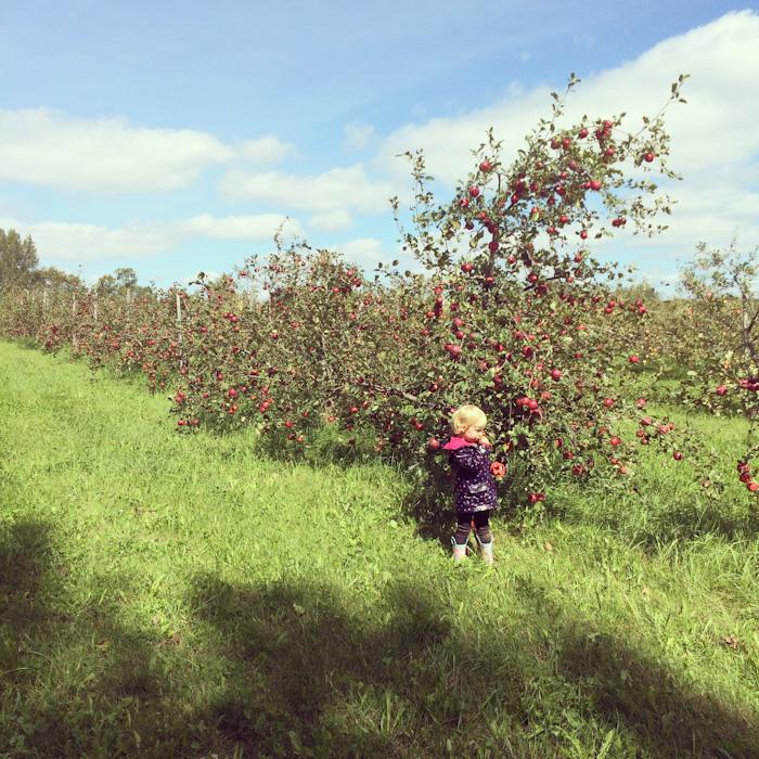 apple_picking-5