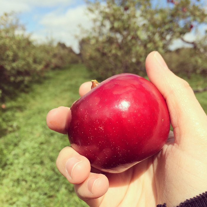 apple_picking-9