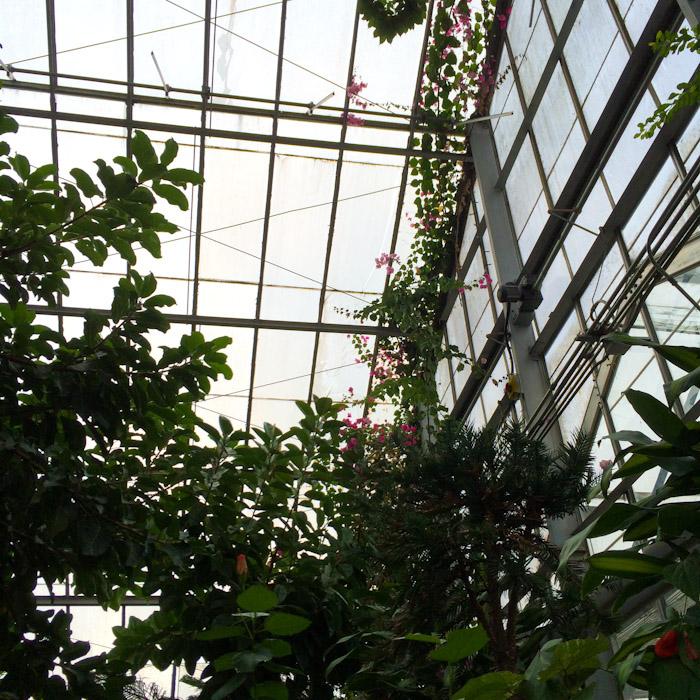 kitka_conservatory-6