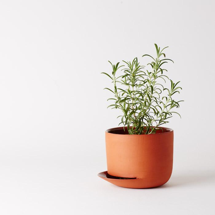 A&V_herb-1